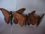 Kupu-kupu gantung 1